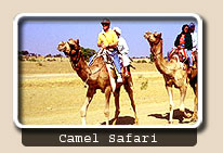 Camel Safari, Pushkar